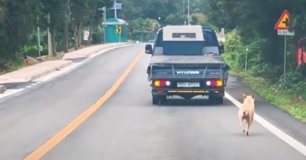 chienne qui suit une voiture
