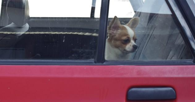 chien dans une voiture sur un parking