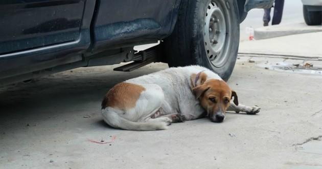 chien voiture enfant