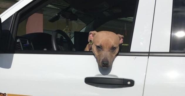 chien dans une voiture de shérif