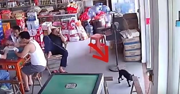 chien voleur