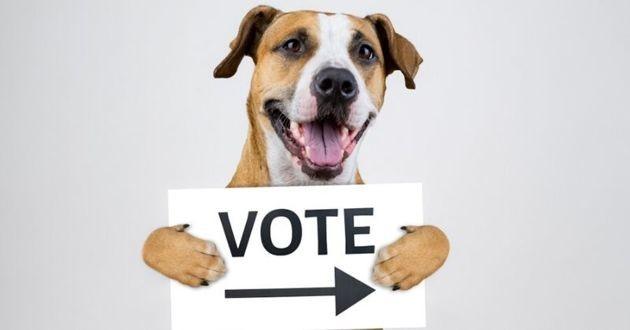 un chien qui incite à aller voter