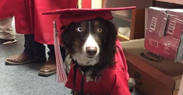 chien de thérapie diplômé