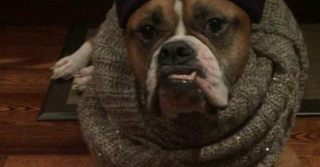 Grâce à son dogsitter, ce chien se met en scène pour rassurer ses maîtres (Vidéo du jour)