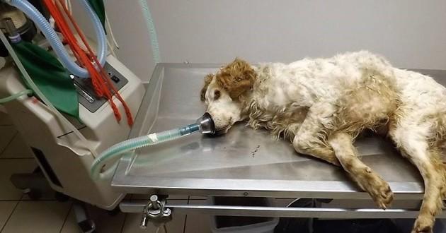 Aslan le chien enterré vivant