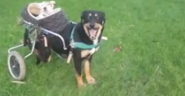 Malgré leurs handicaps, ces deux chiens sont inséparables (Vidéo du jour)