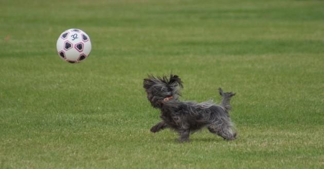chien qui joue au foot