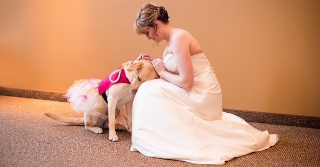 chien mariée