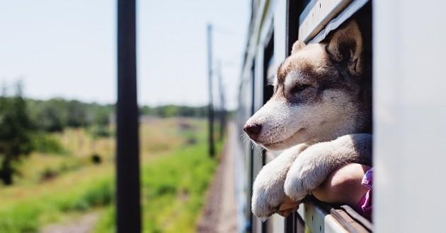 chien métro