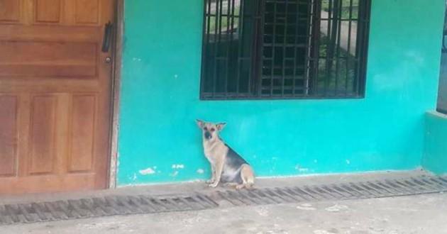 chienne abandonnée maison