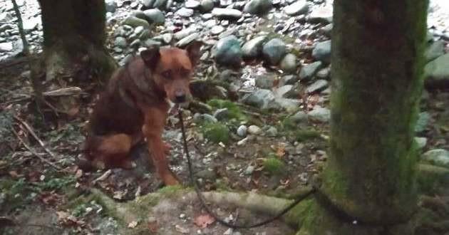 chienne abandonnée au pied d'un arbre