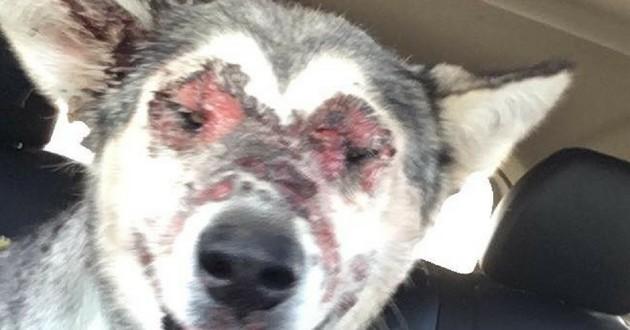 chienne brulée visage