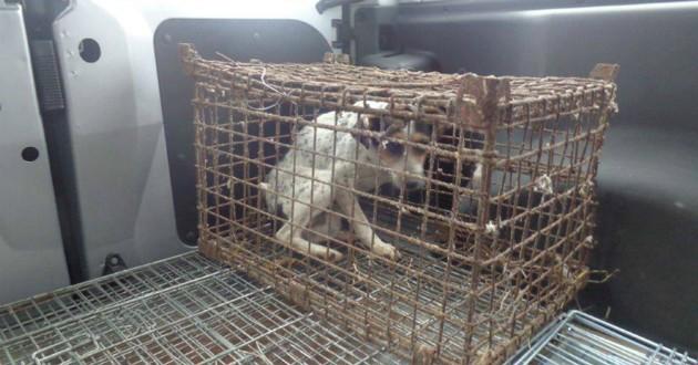chienne cage enfermée