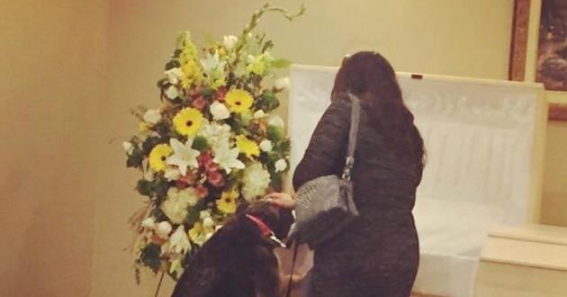 chien cercueil