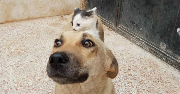 CHIENNE CHATON CHIOTS