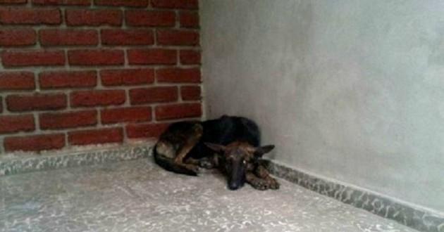 chienne prostrée dans la rue