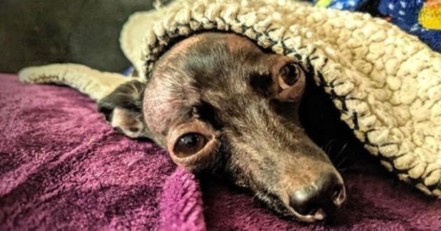 chien déformé dans une couverture