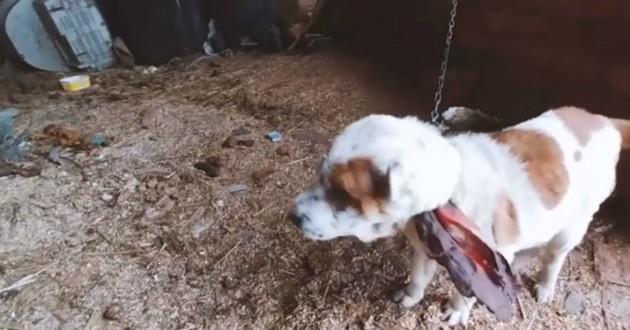 chienne attachée dehors