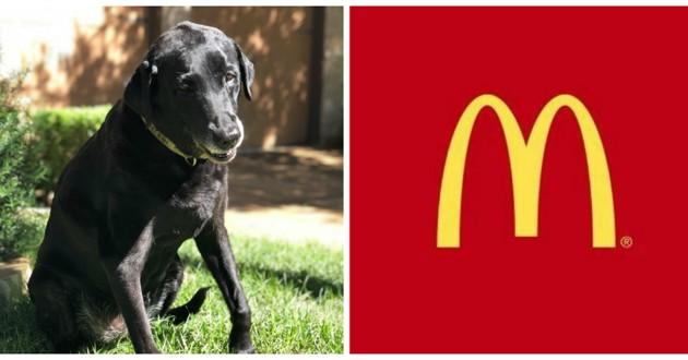 chienne noire mourante