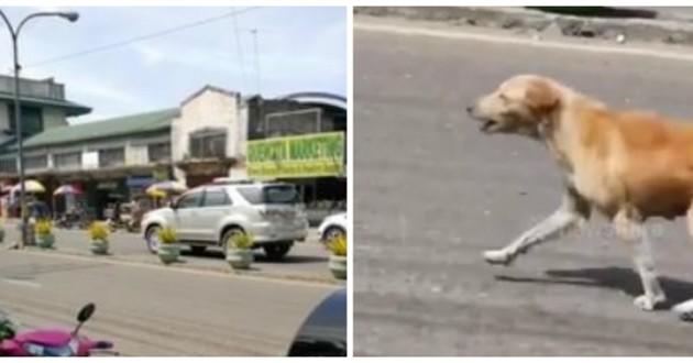 chienne court dans la rue