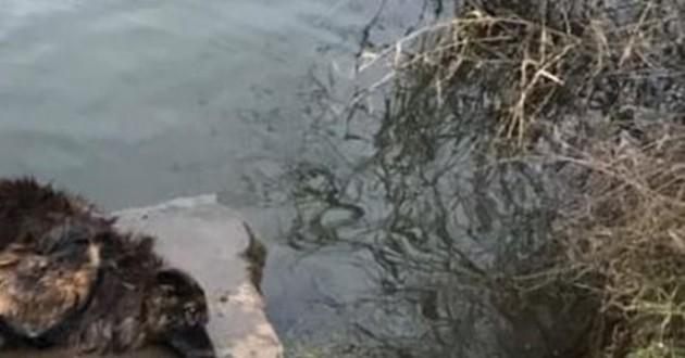 chienne dans une rivière