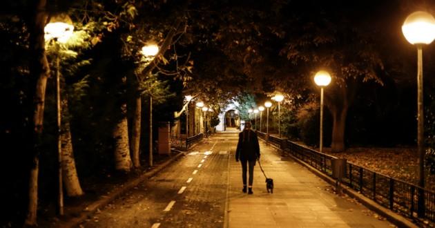 chien dans la rue la nuit