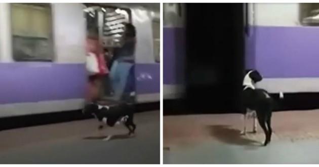 chienne attend train