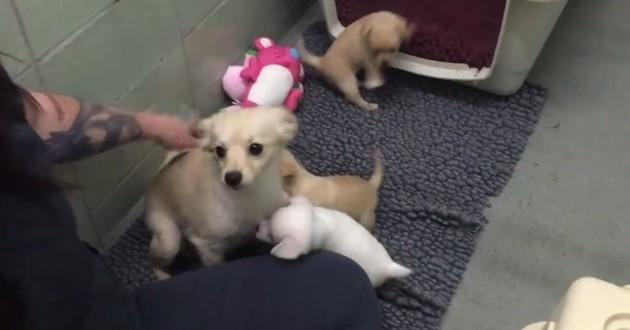 Abandonnée, cette chienne explose de joie lorsqu'elle retrouve ses petits (Vidéo du jour)