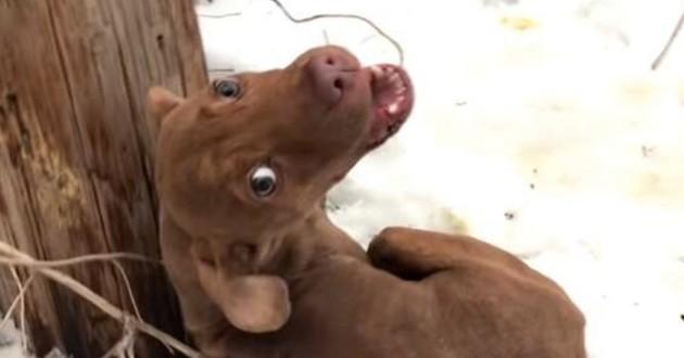 chien gelé
