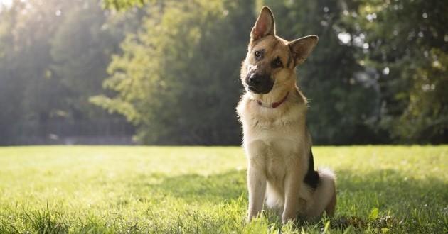 Votre chien penche sa tête de façon adorable ? La science vous explique tout !