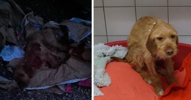 Des adolescents sauvent un chien jeté à la poubelle et décident de l'adopter