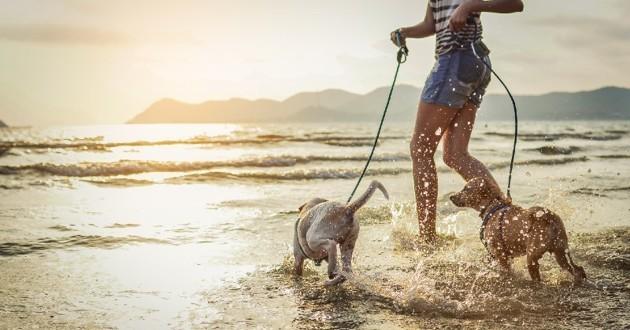 Petit Futé sort un guide intitulé Vacances avec ou sans son animal