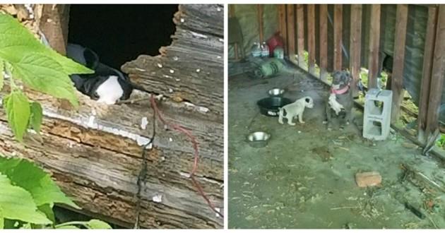 chiens chiots abandonnés