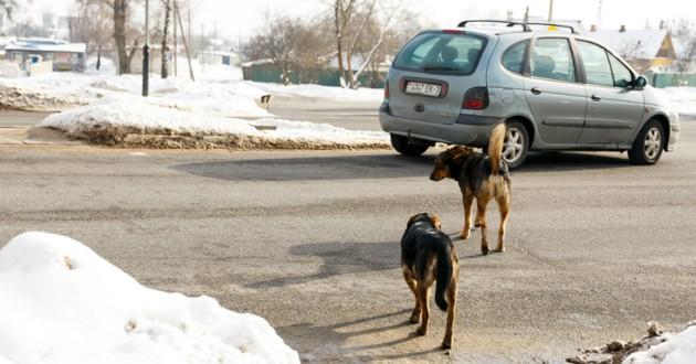 chien abandon voiture