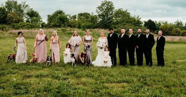 des chiens de refuge à un mariage
