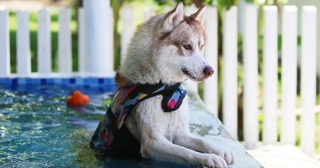 Des chiens qui adorent se baigner