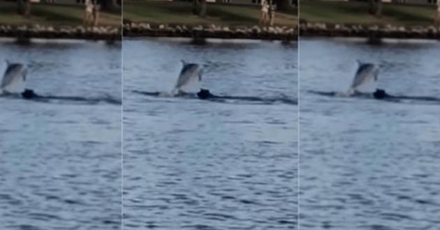 chien qui nage avec un dauphin