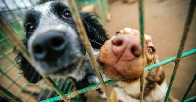 chiens de refuge à adopter