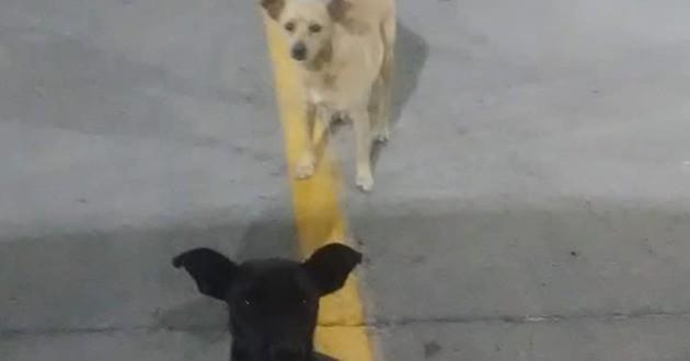 deux chiens errants