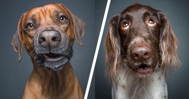 chiens expressifs drôles Elke Vogelsang
