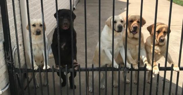 chiens grilles facteur