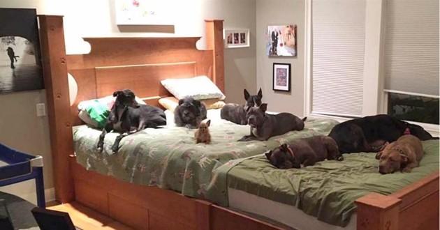 8 chiens sur un grand lit