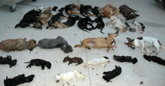 chiens morts association Espagne