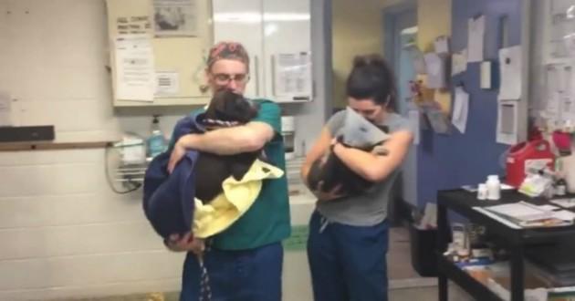 chien opération refuge
