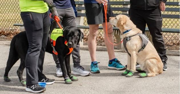 des chiens guide lors d'un semi marathon