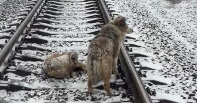 chien rails train