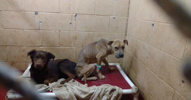 chiens tristes refuge