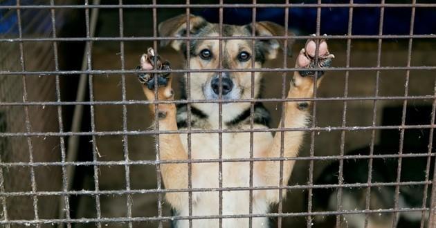 chien adoption SPA