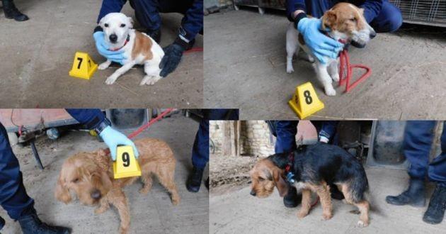 chiens volés à Thouars