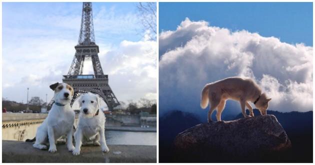 chiens voyage Instagram